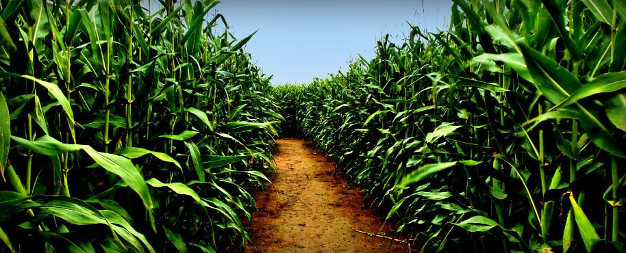 Adventures In Corn Mazes: Thomas Family Farm